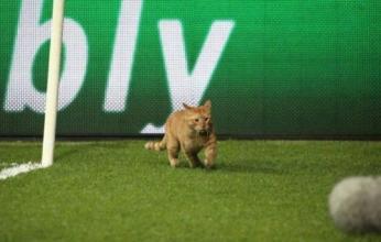بالفيديو.. حيوانات تتسبب فى توقف مباراة إيطاليا وأوكرانيا